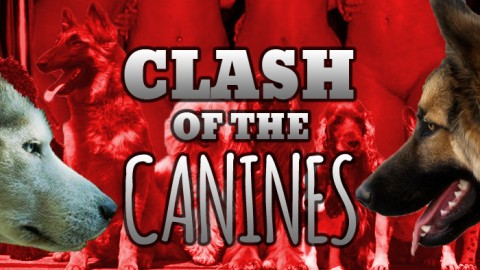Clash of the Canines!