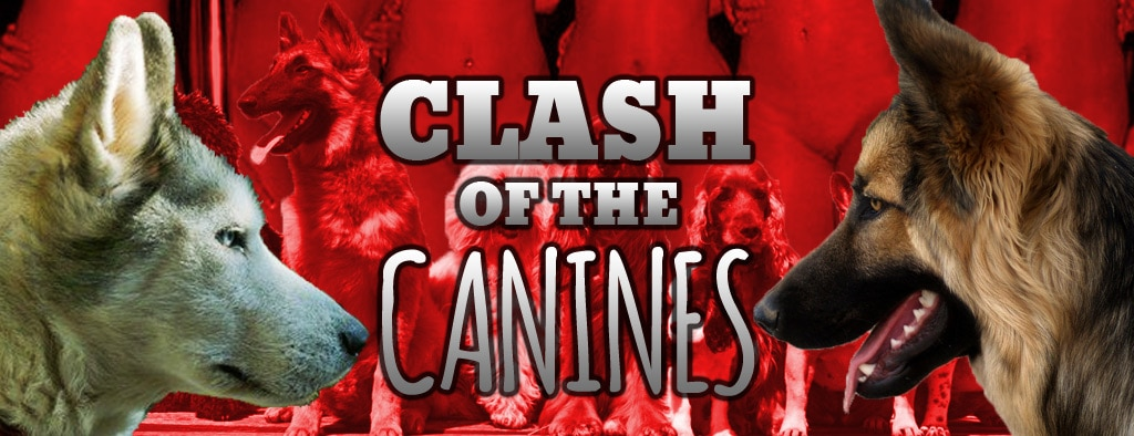 Clash of the Canines! – ArtOfZoo Animal Sex Bestiality and Zoophilia