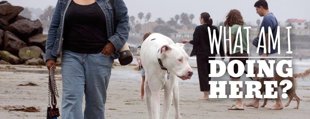 ArtOfZoo - What Am I Doing Here - dog sex stories